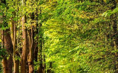 Heb je last van chronische stress? Ga het bos in!